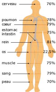 l'eau dans le corps source: http://www.cnrs.fr