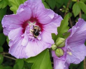 Une fleur à butiner